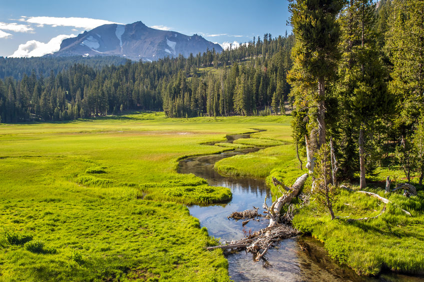 Meadow in Lassen National Park by Pierre Leclerc